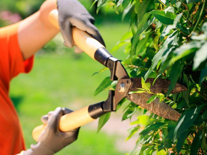 Cómo y cuándo podar las plantas y árboles del jardín