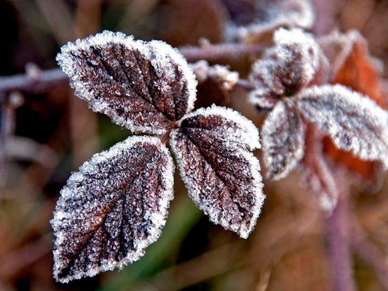 ¿Cómo mantener tus plantas en invierno?