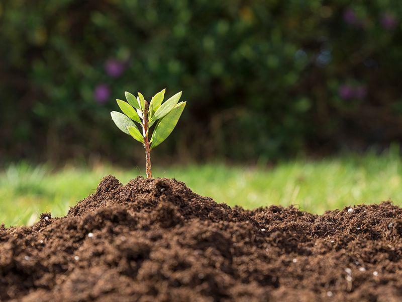 ¿Qué es el Cultivo Ecológico?