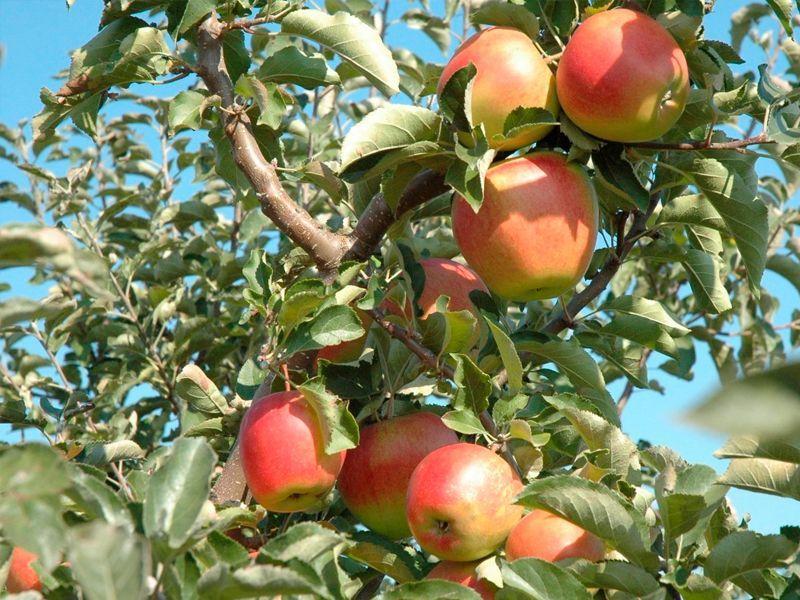Tiempo de cosecha de cada fruta u hortaliza
