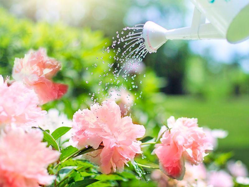 Cómo hacer fertilizante casero.