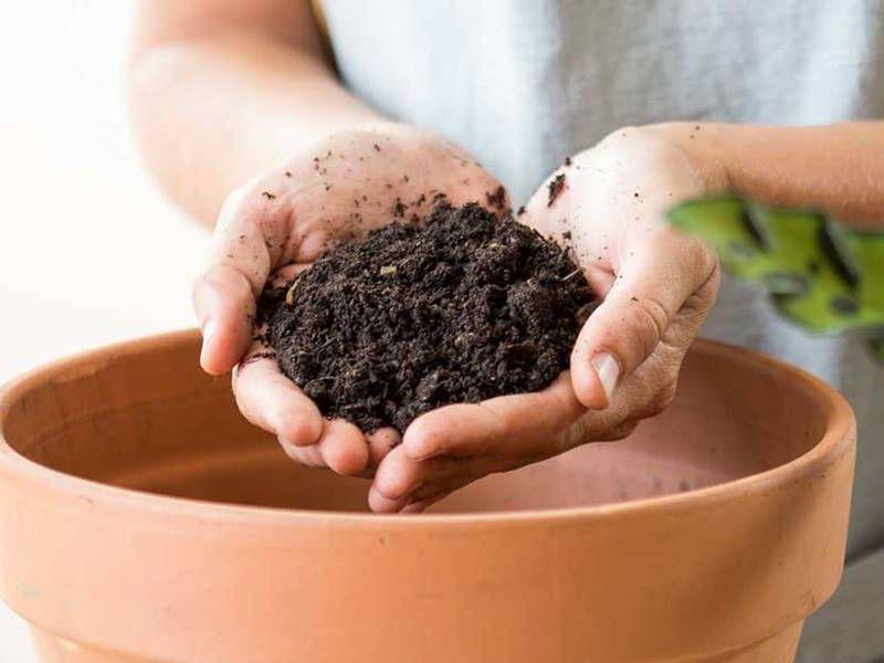 Abono para plantas: consejos para elegirlo